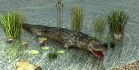 3D鳄鱼模型