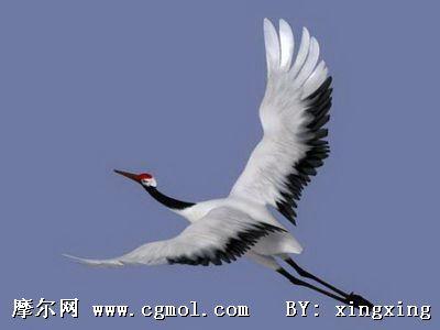 飞禽动物,动物模型