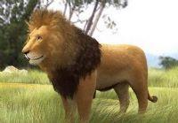 非洲狮子3D模型