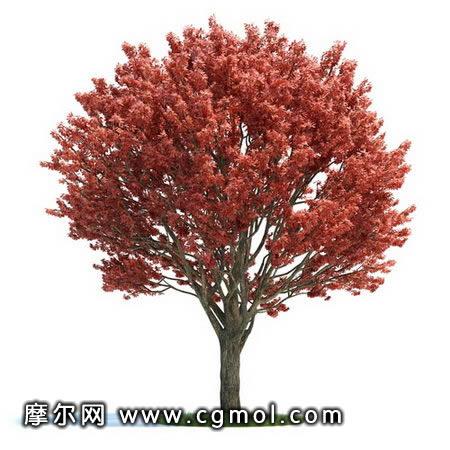 红枫树,树木模型,植物模型,3d模型免费下载,cg模型,网