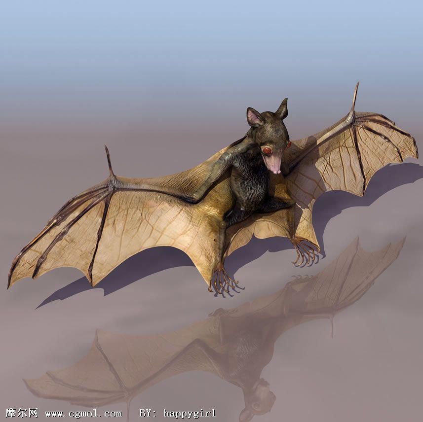 蝙蝠3d模型,飞禽动物,动物模型
