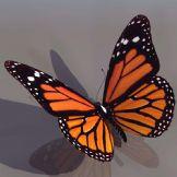 高质量蝴蝶模型(含贴图)