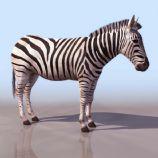 高质量斑马模型