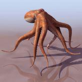 高清章鱼模型