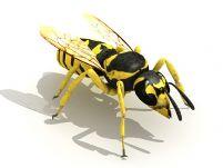 蜜蜂3D模型(含材质)