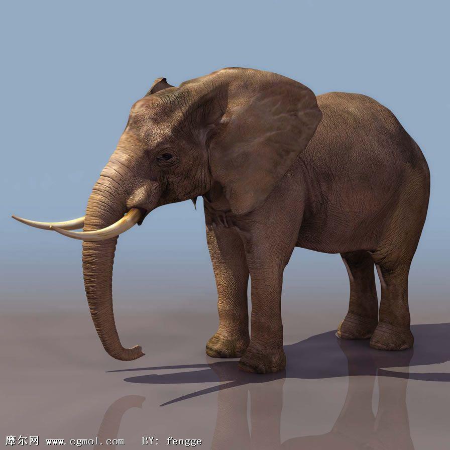 大象3d模型,哺乳动物,动物模型