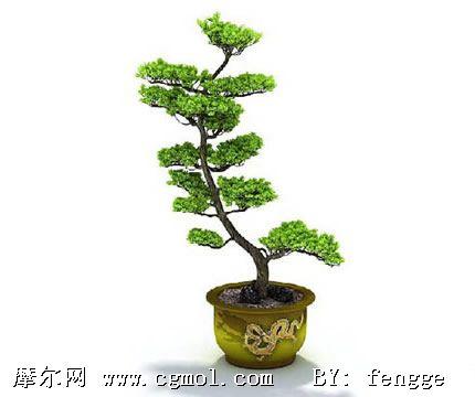 松树盆栽3d模型,树木模型