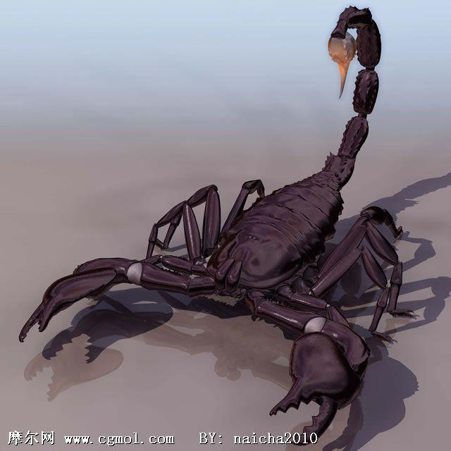 蝎子3d模型,爬行动物,动物模型