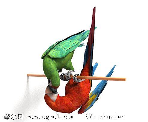 高质量鹦鹉3d模型,飞禽动物