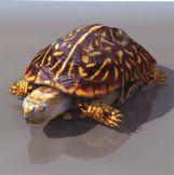 海龟3D模型