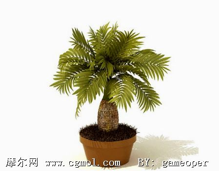 3d树模型,树木模型,植物模型,3d模型免费下载,cg模型