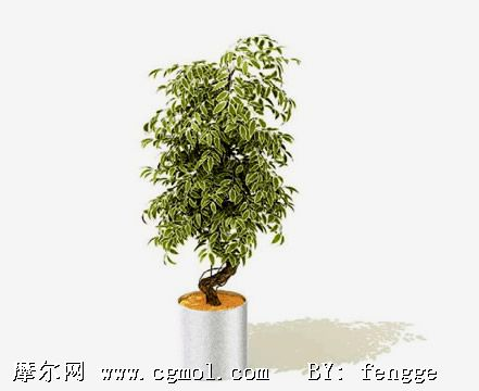 3d树木盆栽模型