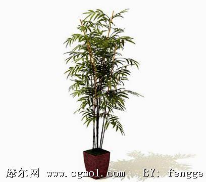 3d竹子盆栽模型
