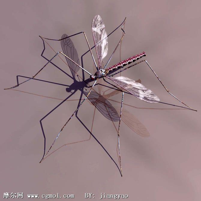 蚊子3d模型,昆虫,动物模型