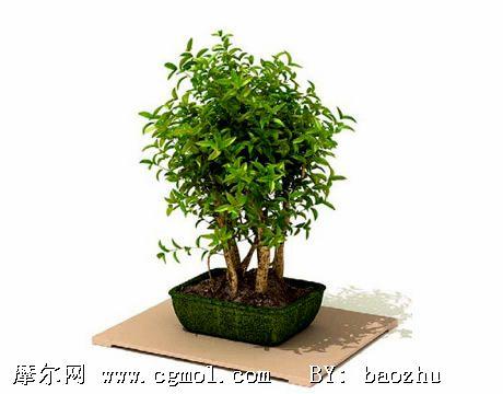 3d植物树木盆栽