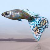 彩色金鱼3D模型