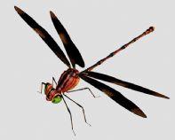 高质量蜻蜓3D模型