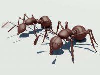 3D蚂蚁模型