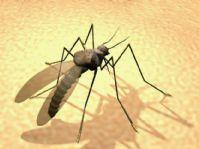 蚊子3D模型