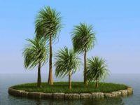 椰子树3D模型