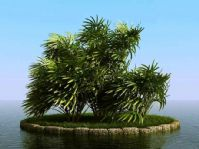 棕竹3D模型