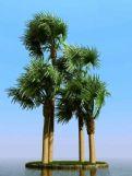 俾斯麦椰子树3D模型