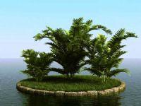 高精细槟榔树3D模型