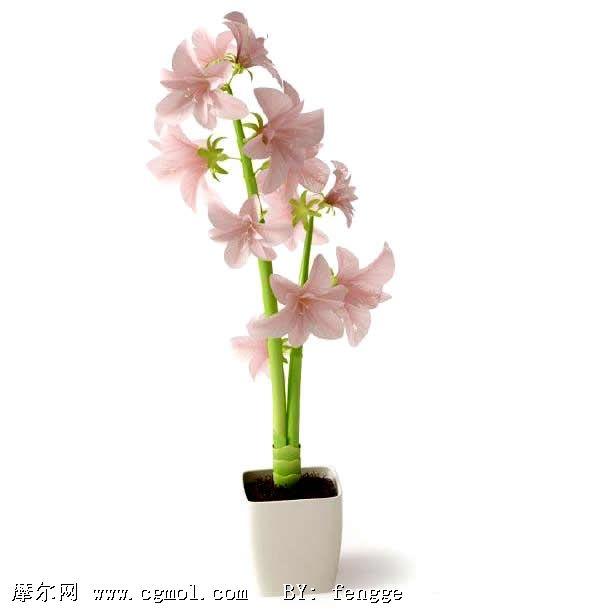 植物模型cg; 高精细盆栽植物 粉红色花 百合花060;; 粉红百合花3d模.