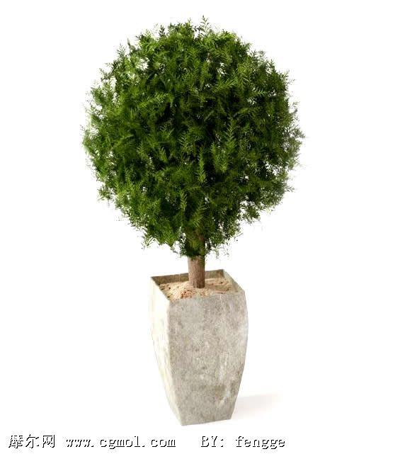 松树种类名称及图解