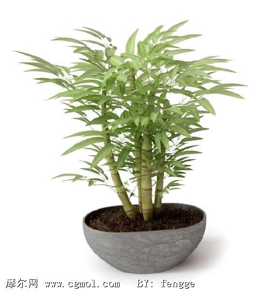 竹子植物盆栽3d模型
