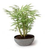 富贵竹,竹子植物盆栽3D模型