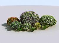 高精细花丛植物3D模型