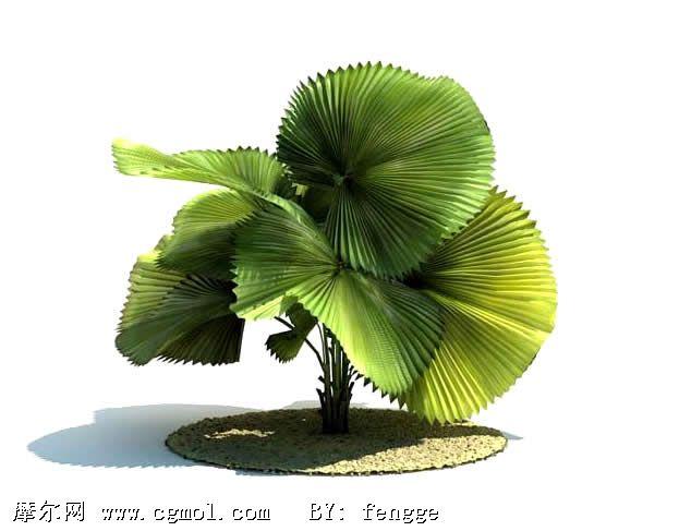 大树3d手绘图