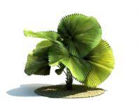 蒲葵树3D模型