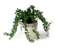 植物藤蔓盆栽3D模型