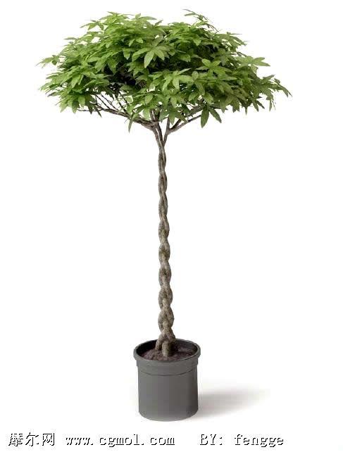 美化植物盆栽3d模型,树木模型,植物模型,3d模型免费