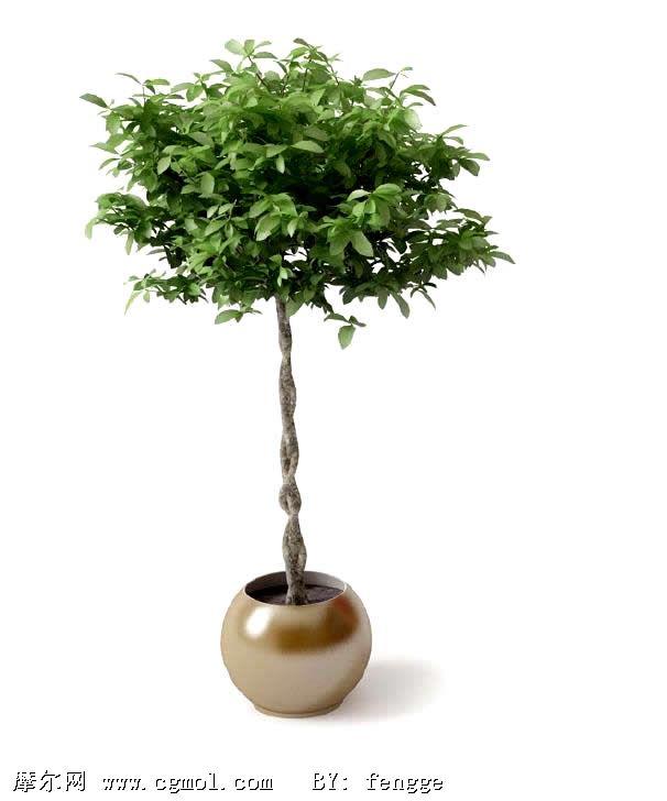 绿化树木盆栽3d模型
