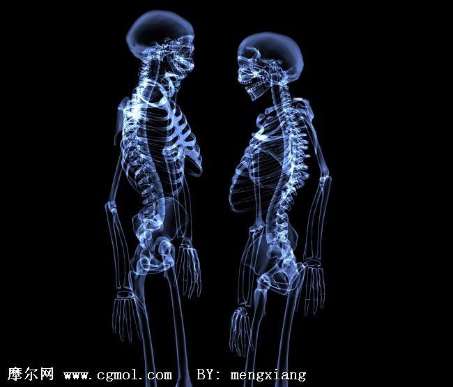 水晶骷髅,骨架3D模型