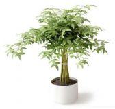 美化绿色植物盆栽3D模型