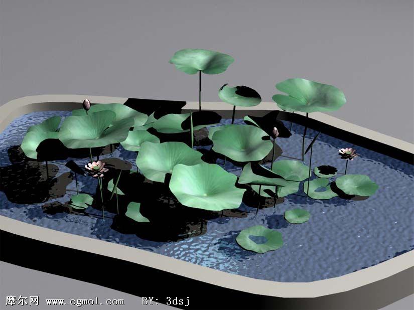 荷花池,荷花3D模型