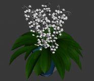 3D白色铃兰花盆栽模型