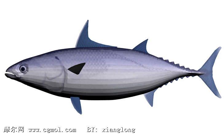 鲣鱼3d模型