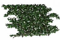 蔓藤植物3D模型