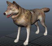 野狼,MAYA动物模型