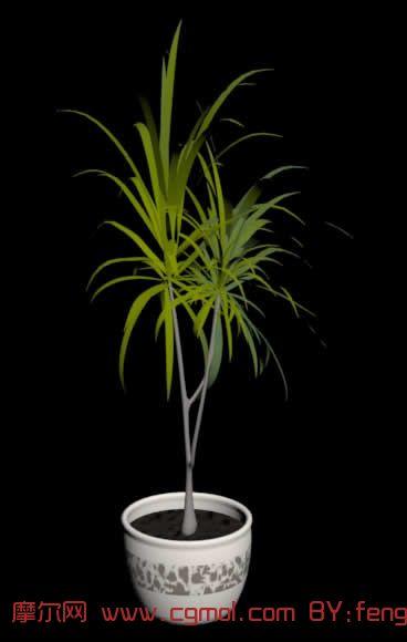 树木植物盆栽3D模型