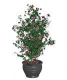 开花的植物树木盆栽3D模型