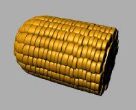 玉米,玉米棒,maya模型