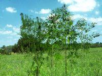 几根竹子,竹林3D模型
