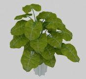 室内绿化植物盆栽3D模型