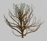 秋天的树3D模型
